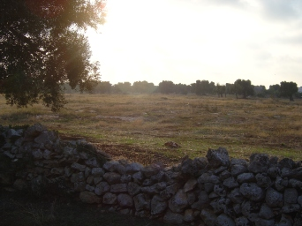 we are surrounded by olive groves